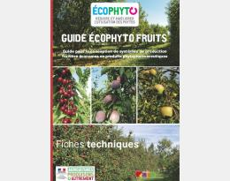 Fiche ECOPHYTO FRUITS : Paillage sur le rang