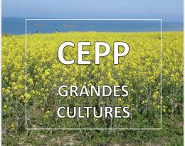 CEPP grandes cultures