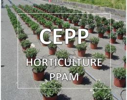 CEPP horticulture PPAM