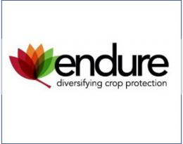 logo endure