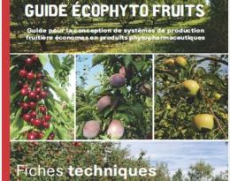 guide fruits